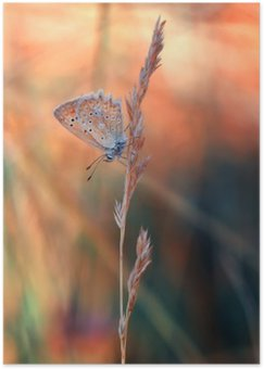 Póster em HD Butterfly