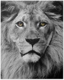 Póster Lion eyes
