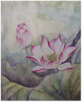 Poster Güzel çiçeklenme lotus