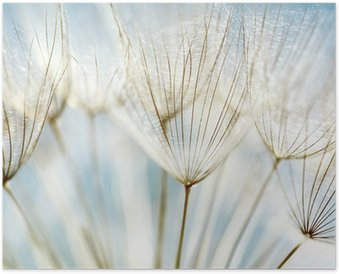 Abstract dandelion flower background Poster