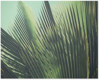 Abstract tropical vintage background. Palm leaves in sunlight. Poster