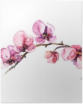 Poster Akvarell blommor orkidé isolerad på den vita bakgrunden