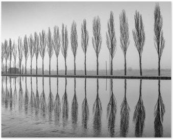 Alberi riflessi sul lago all'alba in bianco e nero Poster