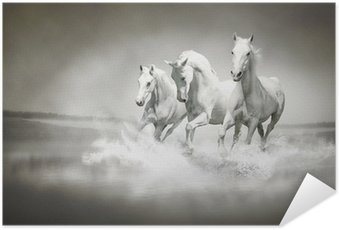 Póster Autoadhesivo La manada de caballos blancos corriendo a través del agua