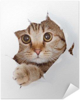 Poster Autocollant Chat regardant en face papier trou déchiré isolé
