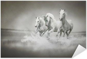 Poster Autocollant Troupeau de chevaux blancs qui traverse l'eau
