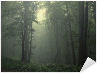 Poster Autocollant Vert forêt après la pluie
