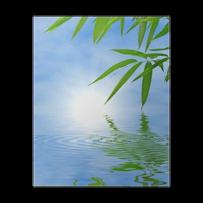 poster bambou et le ciel qui se refl te dans l 39 eau ambiance zen pixers nous vivons pour. Black Bedroom Furniture Sets. Home Design Ideas
