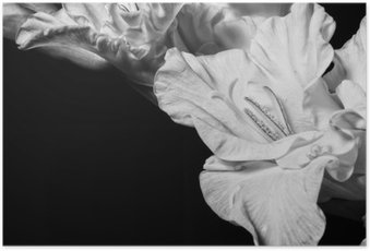 Black and white gladiolus Poster