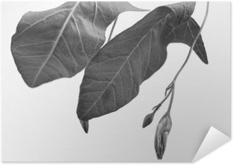 Poster Black and white macrophoto of plant object with depth of field
