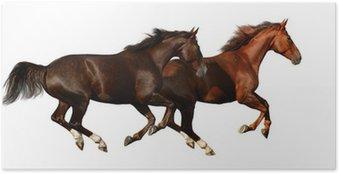 Poster Budenny paarden galopperen - op wit wordt geïsoleerd