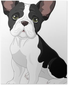 Poster Bulldog french