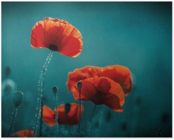 Poster Champ de pavot incroyable. fleurs d'été.