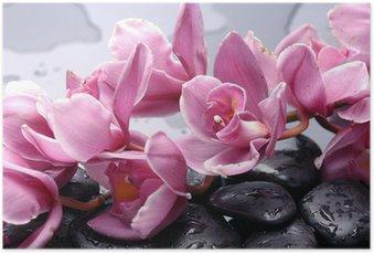 Póster Conjunto de cattleya orquídea y piedras con gotas de agua