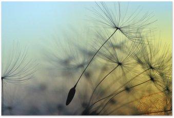 Poster Coucher de soleil doré et le pissenlit, fond zen méditative