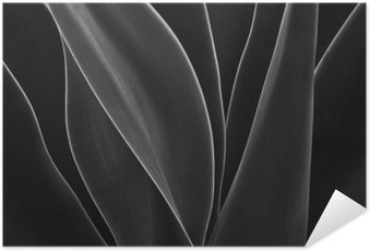 Poster Dancing Agave