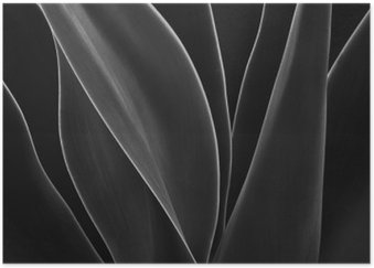 Dancing Agave Poster