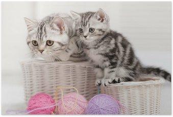 Poster Deux chats dans un panier avec des pelotes de laine