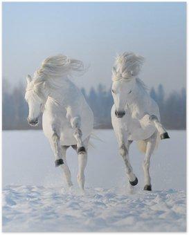Poster Deux galop des chevaux blancs comme neige