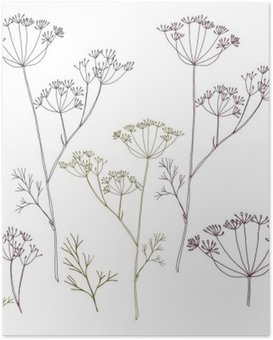 Poster Dille of venkel bloemen en bladeren.
