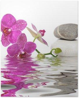 Einfach schöne Orchideen Poster