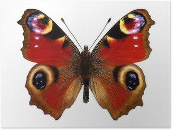 Poster Europese Peacock vlinder (Inachis io)