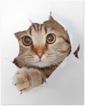 Póster Gato que mira hacia arriba en el lado del papel rasgado agujero aislado