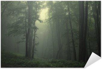 Poster Grön skog efter regn
