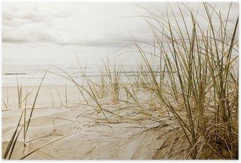 Poster Gros plan d'herbe haute sur une plage