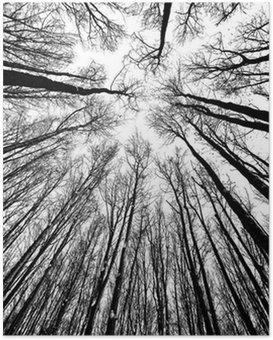 Poster HD Arbres en noir et blanc des silhouettes
