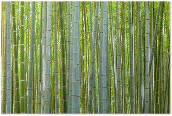 Poster HD Bambou fond dans la nature au jour