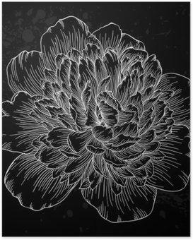 Poster HD Belle fleur de pivoine noir et blanc isolé sur fond. lignes de contour et coups dessinée à la main.