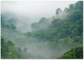 Poster HD Brume matinale dans la forêt tropicale