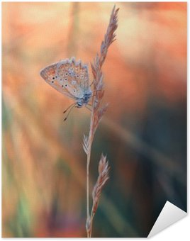 Poster HD Butterfly