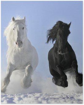 Poster HD Cheval blanc et noir