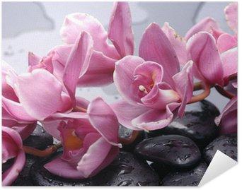 Póster HD Conjunto de cattleya orquídea y piedras con gotas de agua