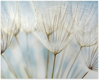 Poster HD Fleur de pissenlit abstraite