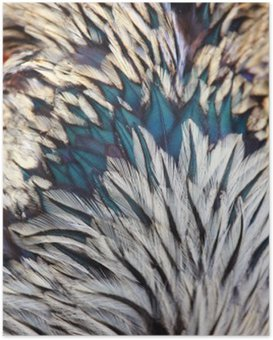 Poster HD Plumes colorées vives d'oiseaux