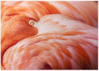 Poster HD Plumes Flamingo - Fond rose Oiseau avec la tête cachée sur Feathers