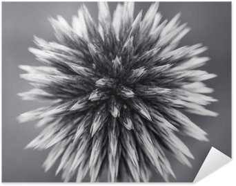 Poster HD Purple Globe Thistle B&W
