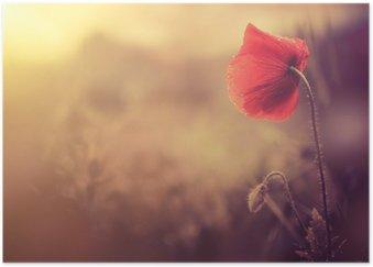 Poster HD Sauvage de fleur de pavot