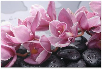 Set of cattleya orchid flower and stone with water drops Poster HD