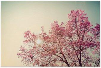 Poster HD Vintage fleur de cerisier - fleur sakura. la nature de fond (rétro filtre couleur de l'effet)