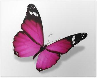Poster HD Violet papillon, isolé sur blanc