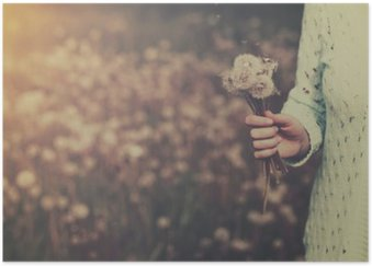 Woman with bunch of dandelion flowers in hand Poster HD