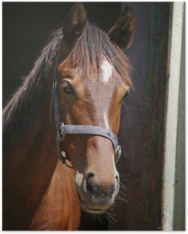 Poster Leuke rasechte paard kijken in zijn stal