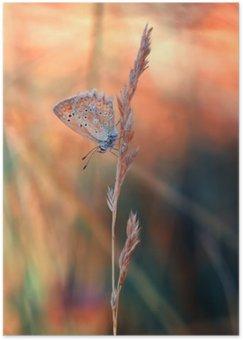 Póster Mariposa