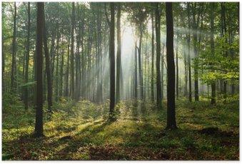 Poster Matin dans la forêt