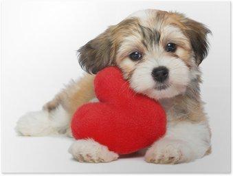 Poster Minnaar Valentine Havanezer puppy hond met een rood hart