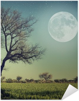Poster Natur-68